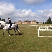 Blenheim Palace - Host To Possibly My Favourite 3 Day Event
