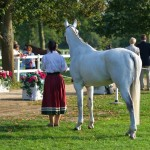 Waiting To Trot-up