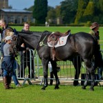 The Japanese Eventing Team At Blenheim To Qualify For London