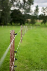 Miles & Miles Of Protective Fencing