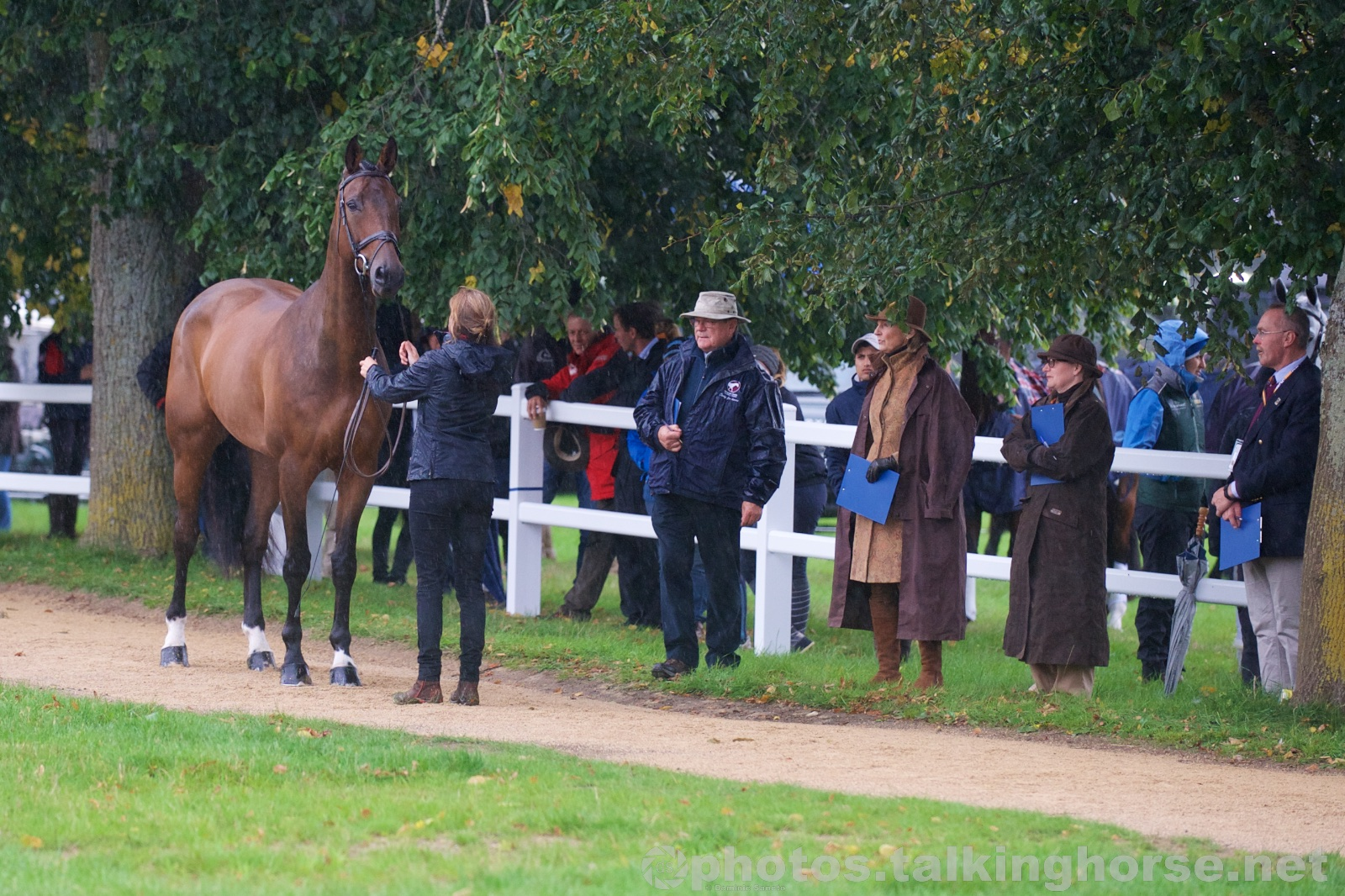 Blenheim Horse Trials 2015 Trot-Up