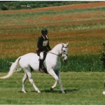 Dressage Amongst The Wildflower Meadows At Barbury